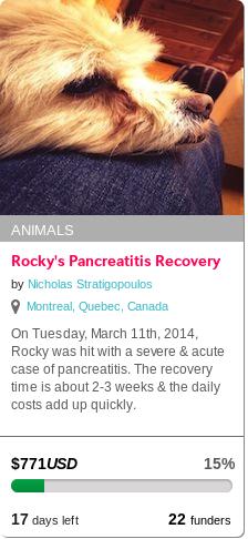 Rocky's Pancreatitis Recovery
